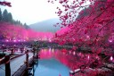 photography_pink_nature.jpg